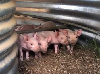 Les premières naissances à la ferme – mai 2021